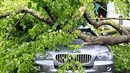 A used BMW X5 is damaged by a tree in a storm